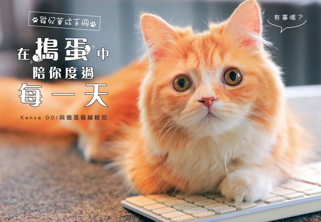 貓奴養成手冊