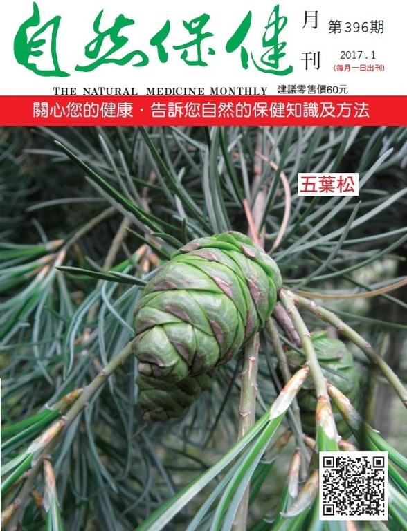 自然保健月刊396期  五葉松
